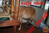 Kozje mleko koze
